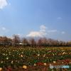 富士の花園