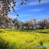 春の花コラボ