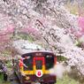 2016 花桃