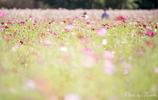 お花畑 2