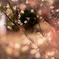 梅♡花盛り