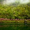 ☆緑の國 ~遅い春