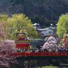 桜の中の高山祭り