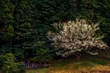 裏山に降りた春