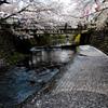 桜 散る頃
