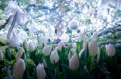 White Christmas !!