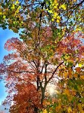 秋晴れポタリング3