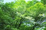 五月の竜ヶ岳