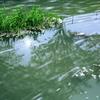 春の小川はサラサラ・・・
