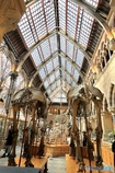 オックスフォード大学自然史博物館6