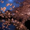 満月で花見