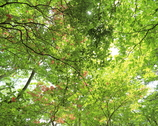 新緑の森Ⅱ