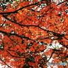 遠足尾根の紅葉