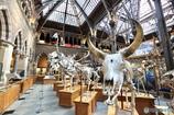 オックスフォード大学自然史博物館4