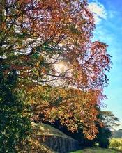 秋晴れポタリング