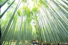 竹林と人の洪水