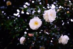 白い花と緑の葉