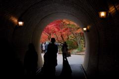 彩りへの隧道