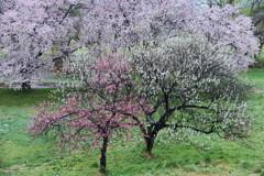 春爛漫の冷え込み