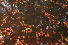 華やぐ水面