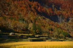 石垣田の秋