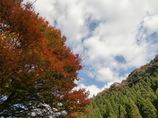 秋の色と空と