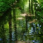 ゆっくり流れる「森の清水』