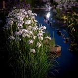 水無月の夕べ