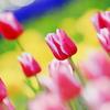 La couleur du printemps