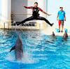 イルカ de ジャンプ