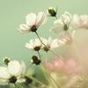 Flower Goblets
