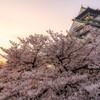 大阪城春の陣
