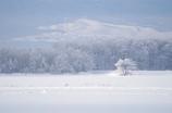 SNOW  WOLRD