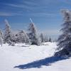 鉢伏山の樹氷