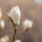 春へのともしび