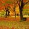 ある秋の一場面