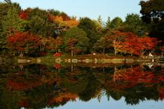 昭和記念公園 日本庭園にて
