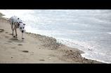 光る海 走る犬