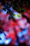 秋のRGB