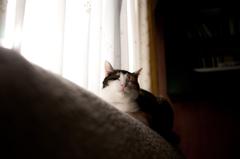 光と影と猫