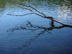 波と木の陰