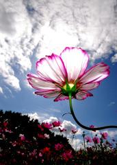 雲と花。。