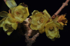 闇に浮かぶ花