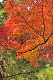 爽やかな秋の日