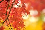 優しい秋の色