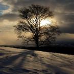 NIKON NIKON D3Sで撮影した風景(THE INDEPENDENT)の写真(画像)
