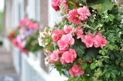 ハウステンボスに咲く花