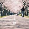 桜風吹く午後に
