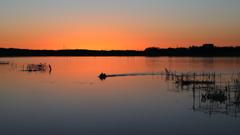 印旛沼・朝景 - 曙の水上レース -