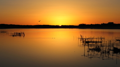 印旛沼・朝景 - 厳かな旭の輝き -
